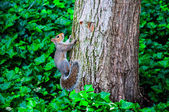 An squirrel climbs the tree — Stock Photo