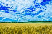 在阳光灿烂的日子在堪萨斯州的一个小麦农场 — 图库照片