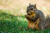 A squirrel is eating in the park — Stock Photo