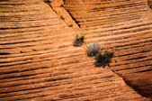 Small trees grow from Rock, Grand Staircase - Escalante national monument, Utah, USA — Stock Photo