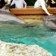 Touching dolphins by their hands — Stock Photo