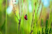 Flora and fauna — Stock Photo