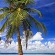 Palm Tree — Stockfoto #31133441