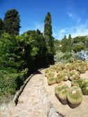 Park. Cactus — Stock Photo