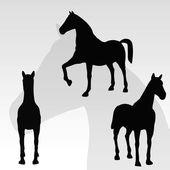Horse portrait standing against white background — Stock Vector