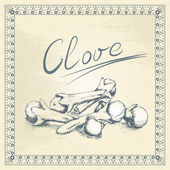 Vintage clove illustration — Stock Vector