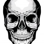 Human Skull — Stock Vector #35116115