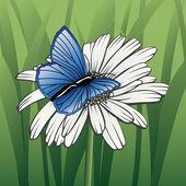 Butterfly On Daisy — Stock Vector