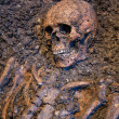 Old skeleton study archeology excavations — Stock Photo #22846778