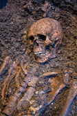 Old skeleton study archeology excavations — Stock Photo