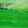 Hills in Tuscany, Italy — Stock Photo