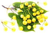 White cherries — Stock Photo