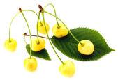 White cherries isolated — Stock Photo