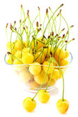 White cherries in bowl isolated — Stock Photo