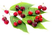 Cherries isolated on white — Stock Photo