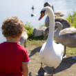 Boy at lake with swan — Stock Photo #30828625