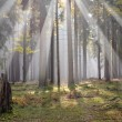 Sun in the forest - Stock Photo