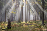 Sun in the forest — Stock Photo