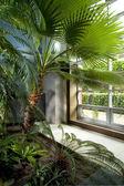 Modern luxurious tropical home garden — Photo
