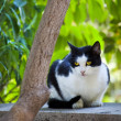 Beautiful black and white cat sitting on a wall and watches — Stock Photo