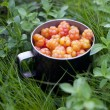 Rubus chamaemorus moros mulberry is a herb native to alpine and arctic tundra English common names cloudberry, bakeapple in Atlantic Canada, Knotberry and Knoutberry England Averin and Evron Scotland — Stock Photo