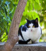 Lindo gato preto e branco, sentado em uma parede e relógios — Foto Stock