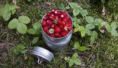 Wild strawberry — Stockfoto