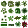 Tropical Plants Collection Plan View Isolated on White Background - Foto Stock
