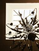 Classic chandelier — Stock Photo