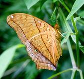 Beautiful yellow butterfly — Stock Photo