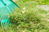 Freshly cut grass to be thrown away — Stock Photo