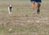 Man and dog walking together — Stock Photo