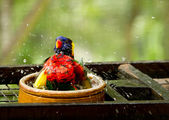 Bird taking a shower feeling good — Stock Photo