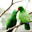 Stock Photo: Love birds