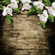 Wood background with spring flowers. Apple blossoms. — Stock Photo