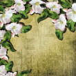 Apple blossoms on the vintage background.  — Stockfoto