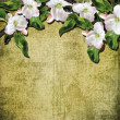 Apple blossoms on the vintage background. — Stock Photo