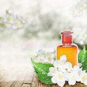 Essential oil with jasmine flower — Stock Photo