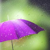 Umbrella in the rain — Stock Photo