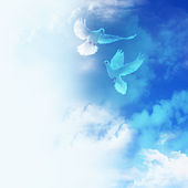 Two doves in the sky — Stock Photo