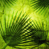 Palm leaves on the vintage background — Stock Photo