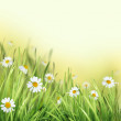 Spring Meadow with Daisies. — Stock Photo #26194251