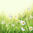 Spring Meadow with Daisies. — Stock Photo #26194271