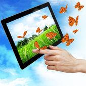 デジタル タブレット pc と女性の手を指す — ストック写真
