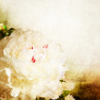 Vintage wallpaper background with peony  — ストック写真