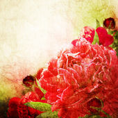 Beautiful pink peonies on the old paper background. — Stock Photo