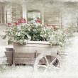 Old wooden cart with pots of Geraniums flowers. Old photo. — Stock Photo