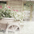 Old wooden cart with pots of Geraniums flowers. Old photo. — Stock Photo #28469949