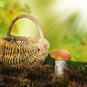 Cep Mushroom in Autumn Forest. — Stock Photo