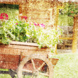 Old wooden cart with pots of Geraniums flowers. Old photo. — Stock Photo #28470415